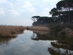 Pineta di Ravenna